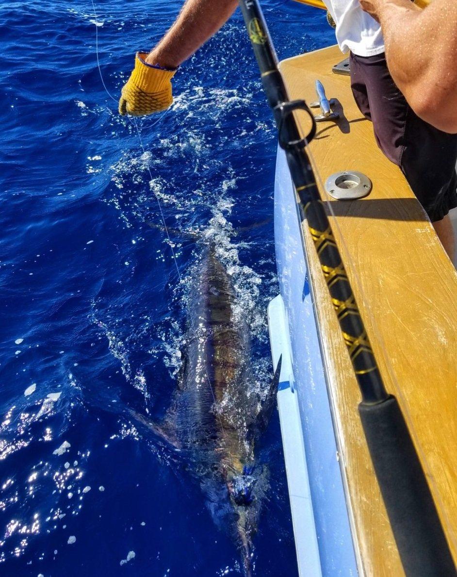 Blue Marlin Fishing Charter Aguada