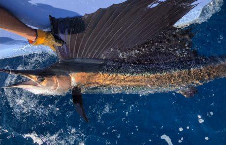 Sailfish Fishing Charter Isabella